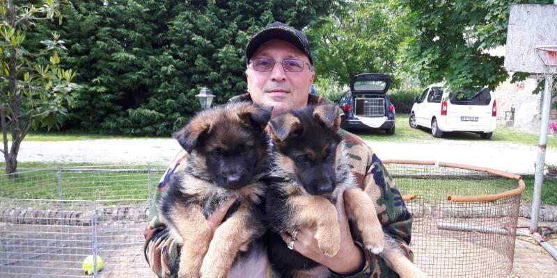 adottare-cuccioli-pastore-tedesco-corte-fiorita